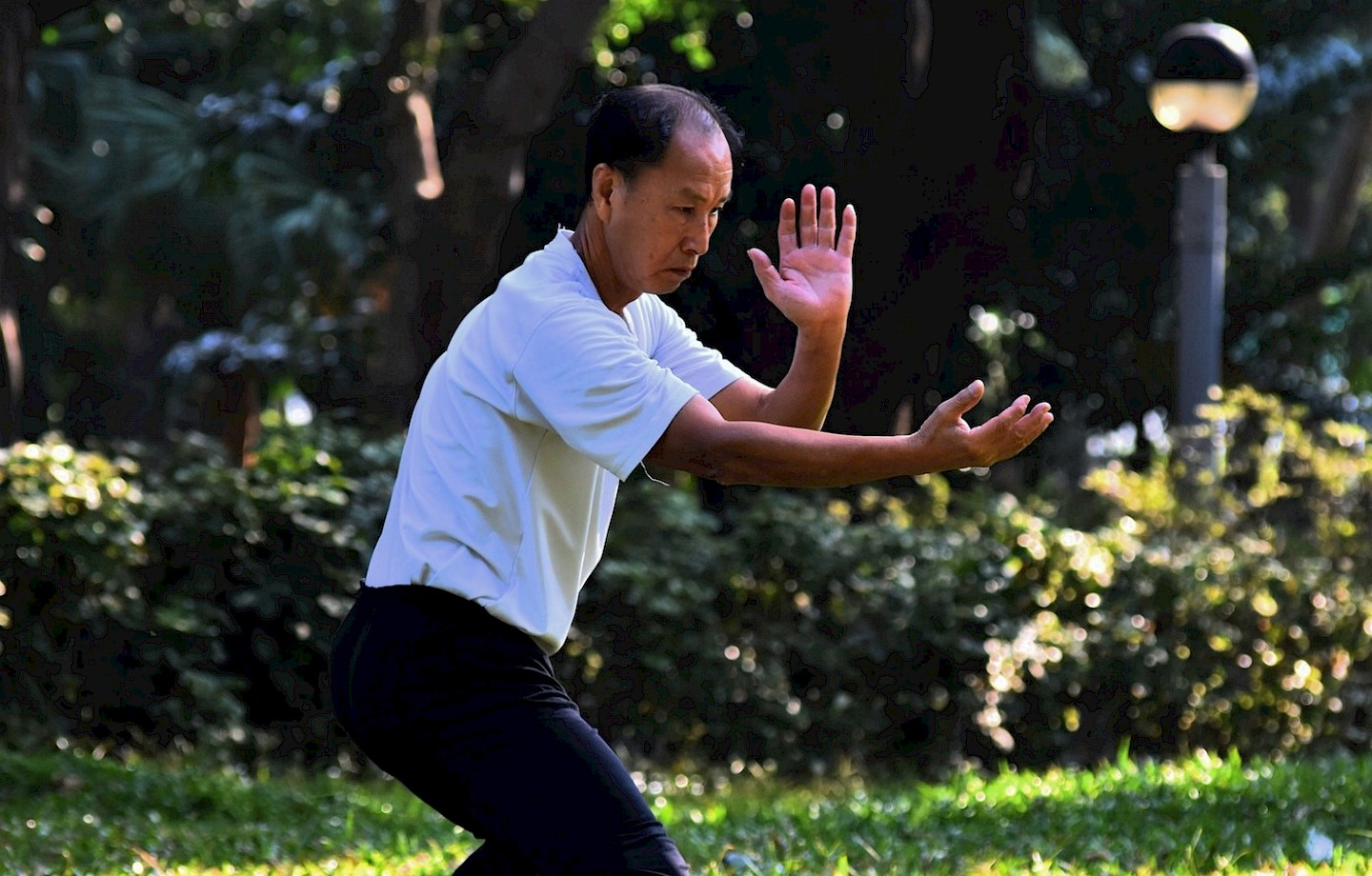 The effectiveness of Tai Chi for short-term cognitive function improvement image